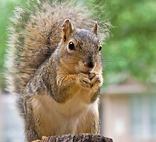 Squirrel Tongue by Cindy Green