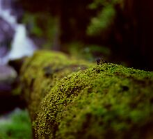 Tree Moss 1 by Hanh