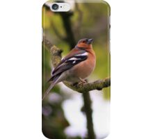 Male Chaffinch on a branch iPhone Case/Skin