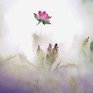 Misty Mood by velveteagle