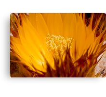 Golden Barrel Blossom Canvas Print