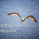 Seagull With Inspirational Words by daphsam