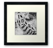 Girafe Framed Print