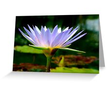 FOR THIS DAY, WE THANK YOU........THE BLUE WATERLILY – Nymphaea nouchall - WATER LELIE Greeting Card