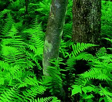 Ferns by Rodney Williams