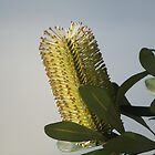 Lakeside Banksia - Fennell Bay by Rochelle Buckley