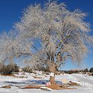 Tree on Navajo Mountain by Susan Russell