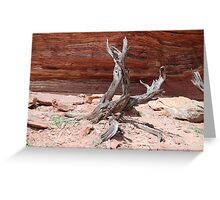 Tree Sculpture, Nature's Window, Kalbarri, Western Australia Greeting Card