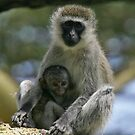 Vervet monkey & baby by David Clarke