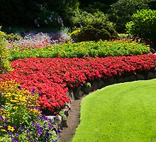 Butchart Gardens by artisticimages