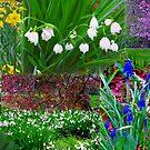 Botanic Gardens - Christchurch NZ by John Brotheridge
