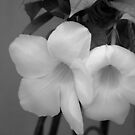 Unknown flower in black and white by Shubhrajit Chatterjee