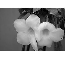 Unknown flower in black and white Photographic Print