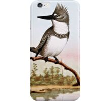 Belted Kingfisher Illustration iPhone Case/Skin