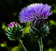 Glowing Thistles by Susie Peek