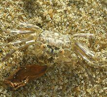 Crabby by Siddharth Dhoka
