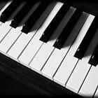 Piano Keys by Jarrod Calati