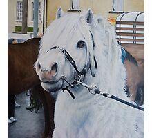 Little Stallion-Glin Fair Photographic Print