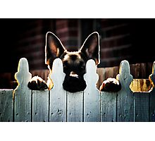 Neighbourhood watch Photographic Print