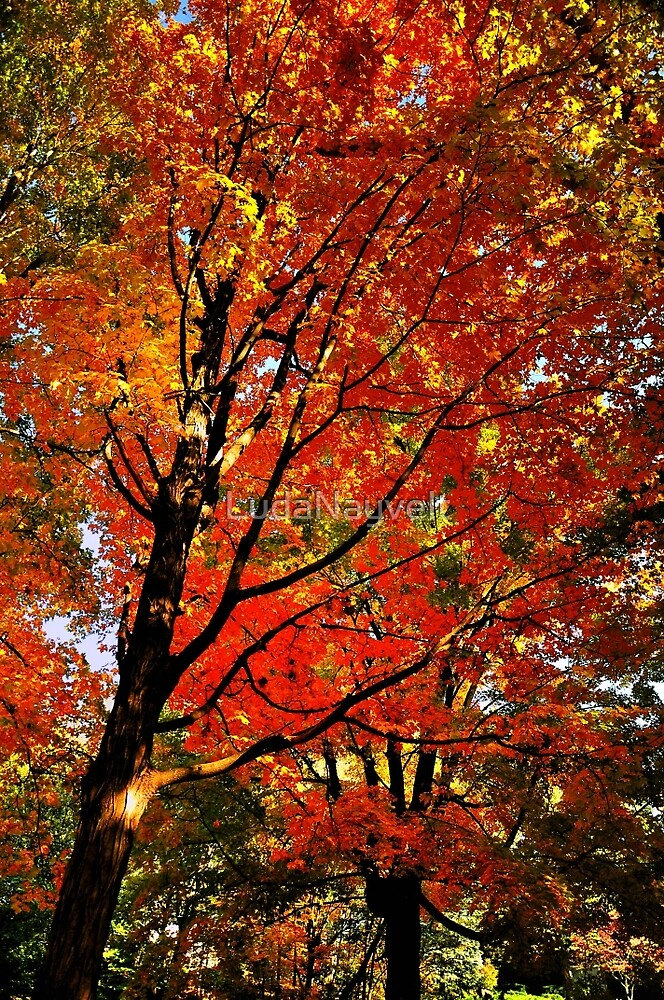 Red Maple by LudaNayvelt