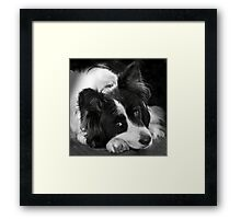 The Border Collie Framed Print