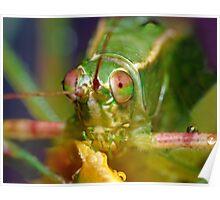 Katydid Closeup ! Poster