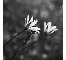 Delictum Photographic Print