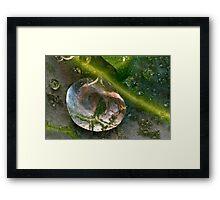 Droplet on a Leaf Framed Print