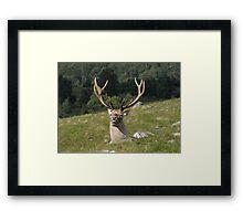His Majesty Framed Print