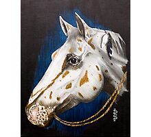 Precious Appaloosa Photographic Print