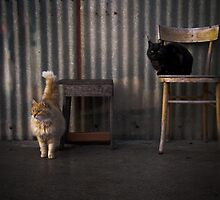 THE ODD COUPLE by June Ferrol