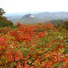 Fall Along The Blue Ridge Parkway by Karen Kaleta
