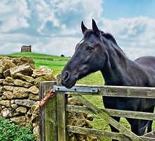 Friendly Neighbour ~ Abbotsbury, Dorset by Susie Peek