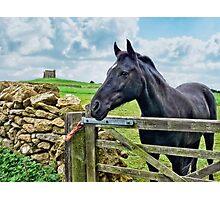 Friendly Neighbour ~ Abbotsbury, Dorset Photographic Print