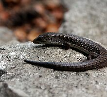 Northern Alligator Lizard Contemplating Lunch by Wolf Read