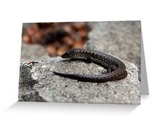 Northern Alligator Lizard Contemplating Lunch Greeting Card