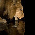 Dark Reflection by Michael  Moss