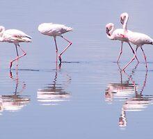 four flamingos by TapSnaps