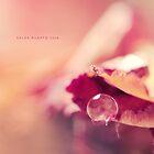 Pink Drop by Saleh Rubat