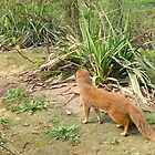 Fox mangoose by schaduwvacht