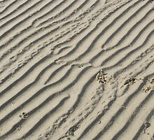 lines in the sand by spikeandgizmo