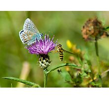 Butterly and co. Photographic Print