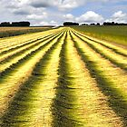 Fields of flax by triciamary