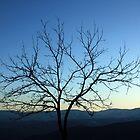 A lone tree at sunrise by Shah-rah