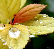 Autumn Leaves and Crystal Drops by plunder