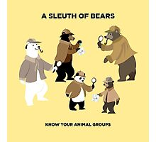 A Sleuth of Bears Photographic Print