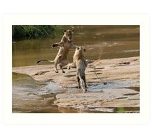 Lions Playing In Water Art Print