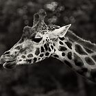 Gorgeous Giraffe by Mabs