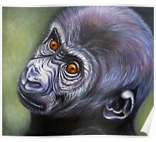 Primates- young gorilla Poster