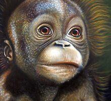Primates-  Young Orangutan by Francesca Romana Brogani
